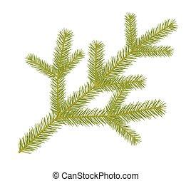 Spruce twig. - Green spruse twig.