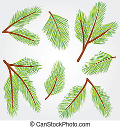 Collection of green spruce twigs - winter vector illustration