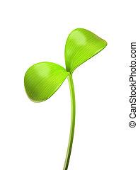 spruit, jonge, vrijstaand, groene achtergrond, witte