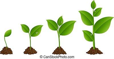 spruit, set, groene
