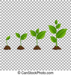 spruit, set, groene, transparant, achtergrond
