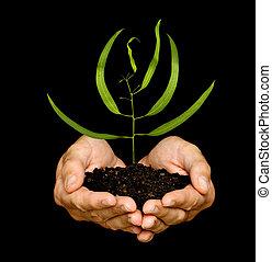 spruit, symbool, bescherming, handen, natuur