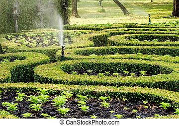 spruzzatore acqua, in, giardino