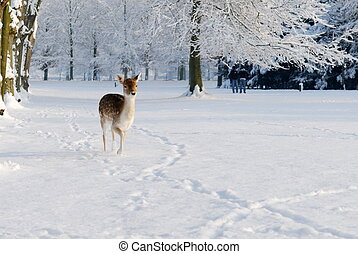 sprytny, jeleń, w, zima