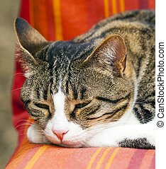 sprytny, kot, leżanka, spanie