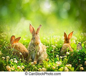 sprytny, mały, króliki, sztuka, łąka, rabbits., projektować,...