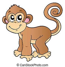 sprytny, mały, małpa