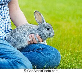 sprytny, mały, szary królik, w, przedimek określony przed rzeczownikami, siła robocza, od, niejaki, woamn, na, zielona trawa, tło., zatkać się