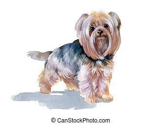sprytny, yorkshire, ręka, pociągnięty, pies, terier