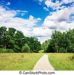 spur, in, der, sommer, der, park, blauer himmel