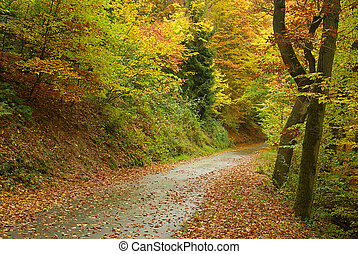 spur, in, herbst wald, 01