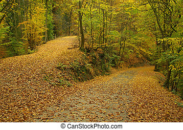 spur, in, herbst wald, 02