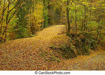 spur, in, herbst wald, 03