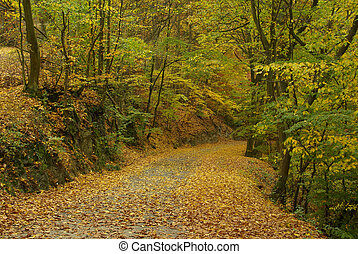 spur, in, herbst wald, 04