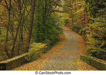 spur, in, herbst wald, 05