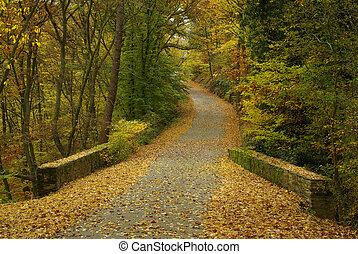 spur, in, herbst wald, 06