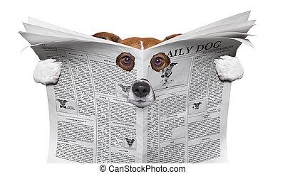 spy dog reading a newspaper
