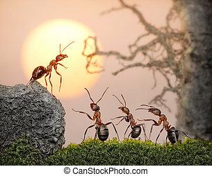 squadra, di, formiche, consiglio, collettivo, decisione