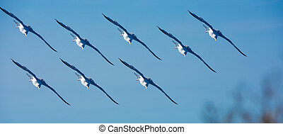 Squadron photo montage seagulls flying in blue sky, France