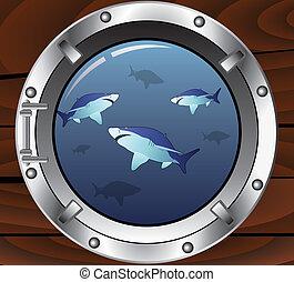 squali, oblò, pericoloso, vettore