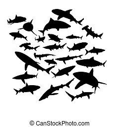 squali, set