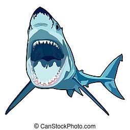 squalo, con, aperto, bocca