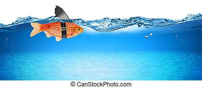 squalo, concetto, affari, isolato, finto, idea, creativo, innovazione, pesce rosso, pinna