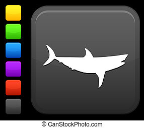 squalo, icona, su, quadrato, internet, bottone