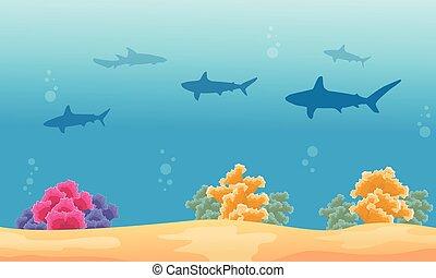 squalo, paesaggio, silhouette, barriera corallina