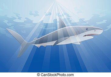 squalo, vettore, mare, sotto