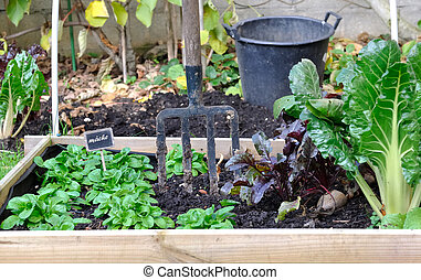 square for vegetable garden