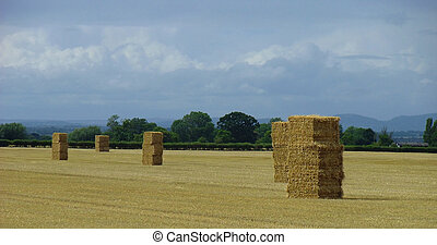 Square Hay Bails Stacked In Field