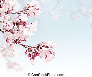 Square spring background with sakura flowers