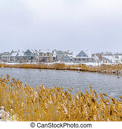 Square Yellow grasses growing on the shore of a lake covered with fresh snow in winter