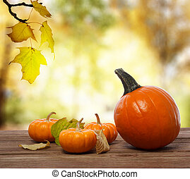Pumpkins and squashes on rustic wooden boards with an shinning autumn backdrop