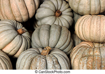 Squashes backdrop. Many pumpkins texture. Gourds background.