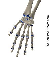 squelettique, main