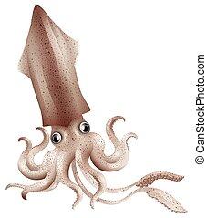Squid - Close up fresh squid with big eyes