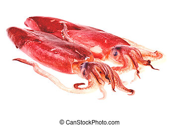 Squid in isolated on white