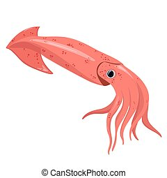 Squid isolated on a white background. Vector graphics.