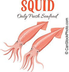 Squid vector illustration in cartoon style.