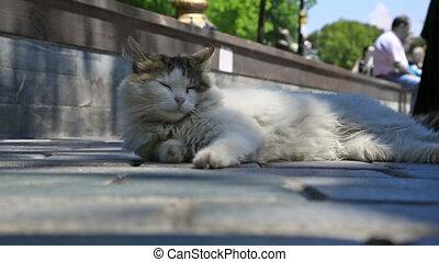 squinting, солнце, улица, кот