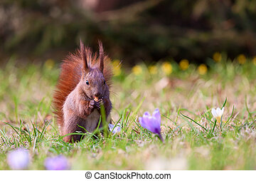 Squirrel amongst flowers in the grass