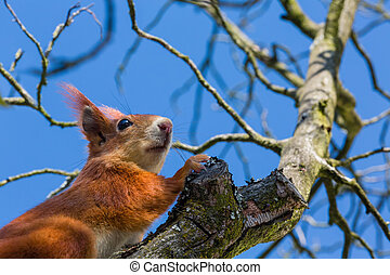 squirrel and blue sky