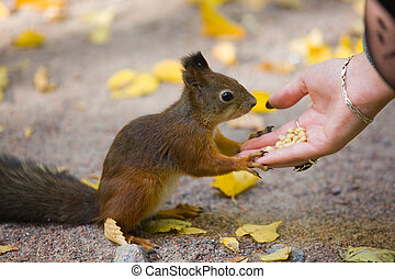 squirrel and hand