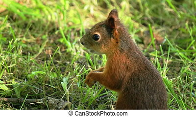 Squirrel chews