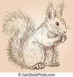 Squirrel - Cute fluffy squirrel with a nut