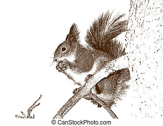 squirrel., dibujo