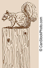 Squirrel Drawing image isolated on a brown background.
