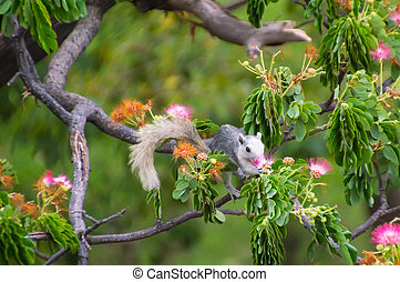 squirrel eat the pollen of flower